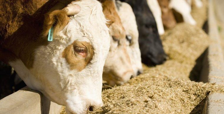 Акции американского производителя мяса Tyson Foods могут вырасти на 15%