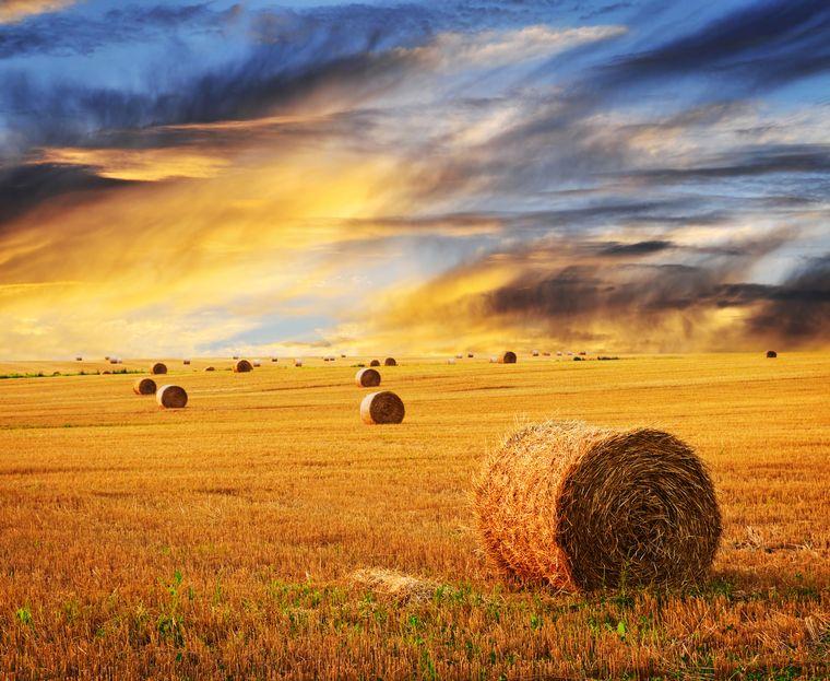 Объем экспортируемой из России пшеницы вырос почти на 25%