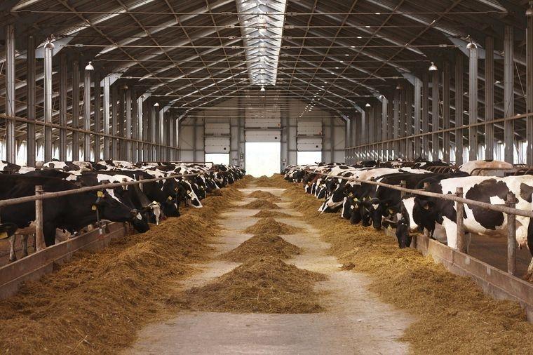 Российское оборудование для производства молочной продукции появится на европейских рынках