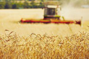 Объем сева яровых культур составил 6,3 млн га – Минсельхоз России